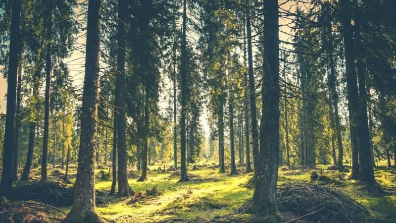 Darf ich Äste und Holz im Wald sammeln? (für Feuerholz, Bauholz, Schnitzholz)