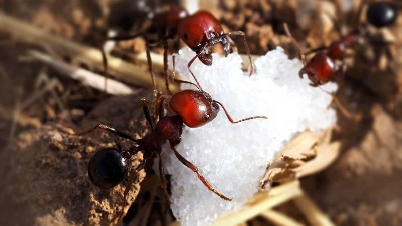 Mit Zucker hältst du dir Insekten fern, fängst sie aber auch damit