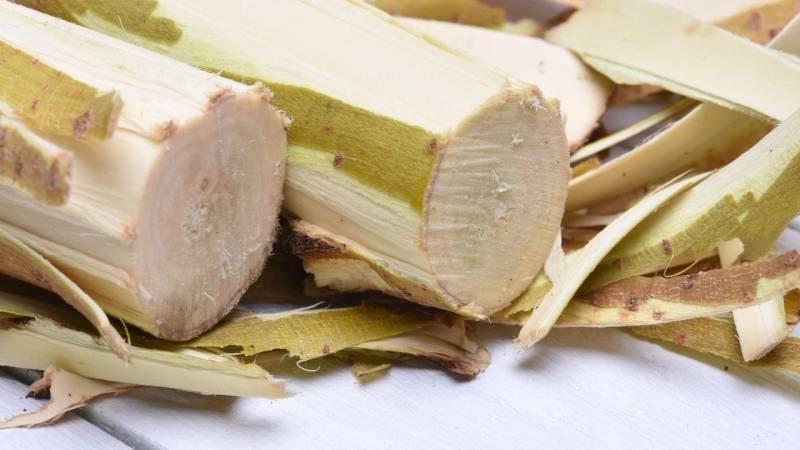 Die Innenrinde (das Kambium) enthält Stärke, Zucker, Vitamine, Mineralien und Ballaststoffe