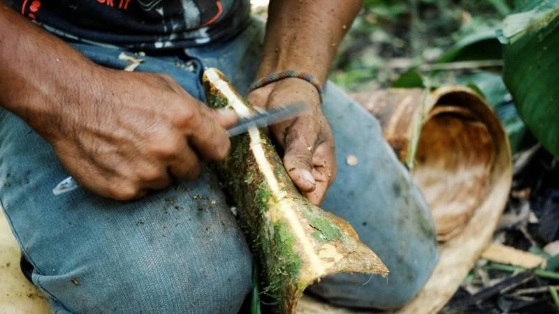 Kann man Baumrinde essen, um zu überleben? Wie schmeckt Baumrinde?