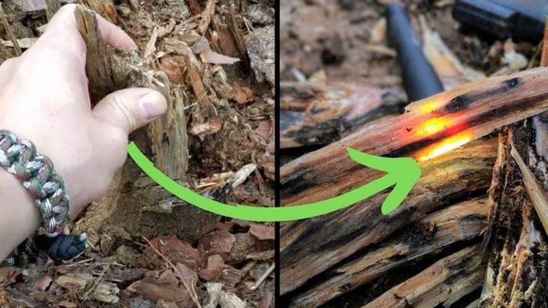 Aus einem alten Baumstumpf einer Kiefer kann man gut Kienspan gewinnen