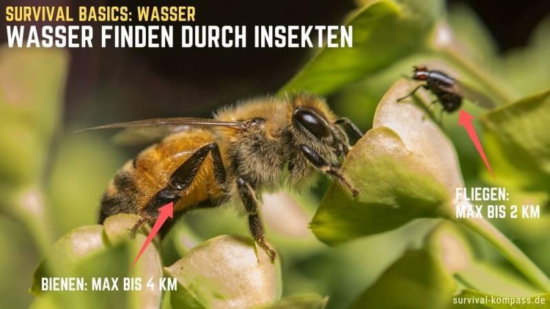 Insekten, wie Bienen und Fliegen, deuten auf Wasser in der Nähe hin