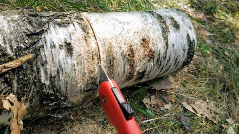 Säge ein Stück von einem gefällten Baum ab
