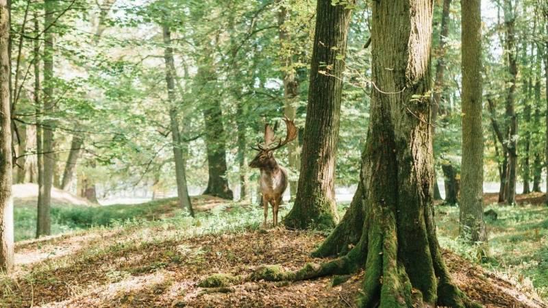 Tiere, Pflanzen, Bäume – Bushcraft bedeutet, den Wald mit seinen Wesen zu kennen