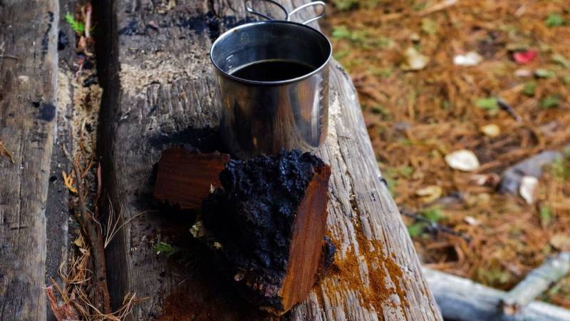Der Chaga ist wegen seiner heilenden Wirkunge besonders als Tee bekannt