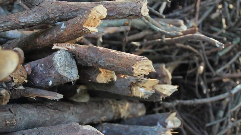 Holt, Stöcke und Äste sammeln regelt das Waldgesetz deines Bundeslandes