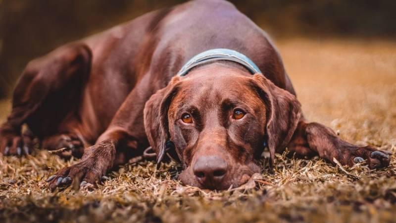 Wenn du mit deinem Hund übernachtest, solltest du an Decken oder einem Hundeschlafsack denke
