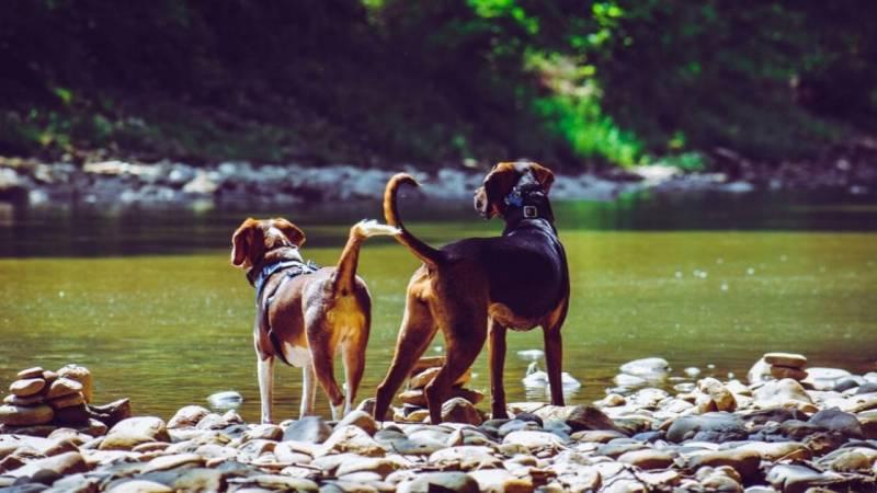 Starte deinen ersten Bushcraft-Ausflug mit Hund mit einem Tagesausflug