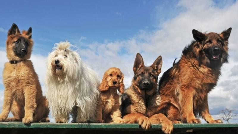 Jeder Hund ist individuell und hat unterschiedliche Ansprüche und Bedürfnisse