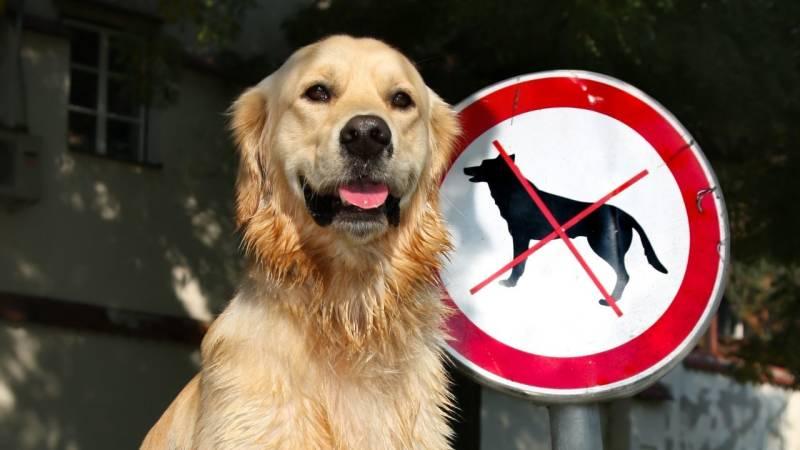 Vergewissere dich, dass Hunde auf dem Campingplatz erlaubt sind