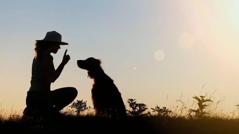 Die beste Grundlage für eine partnerschaftliche Beziehung mit deinem Hund, ist eine gute Erziehung.
