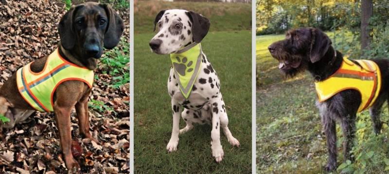 Mit einer Warnweste oder einem Sicherheitshalsband lässt sich dein Hund schnell von Wildtieren unterscheiden