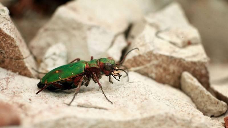 Stelle dich darauf ein, dass Insekten keinen Bogen um dich machen