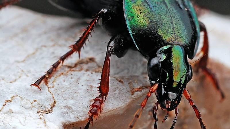 Survival Basics: Insekten essen (Zubereitung, Fangen, Zucht)