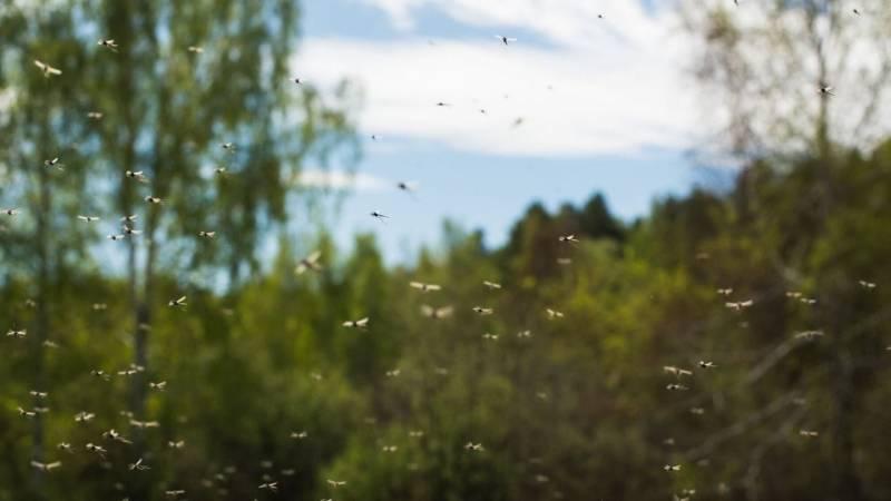 Bereite dich auch auf ungebetene Insekten, wie Mücken, vor