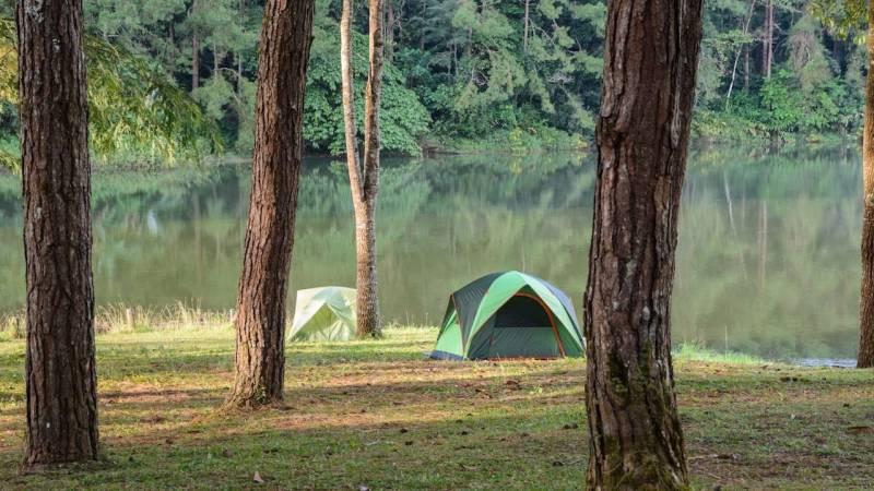 Ist Schlafen im Wald erlaubt? [Strafen und Alternativen]