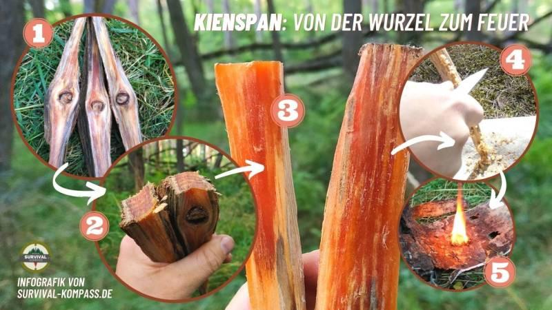 Kienspan: Von der Wurzel zum Feuer, eine Infografik der Schritte