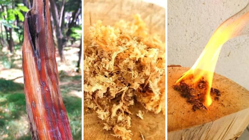 Fein abgeschabte Flusen von harzdurchtränktem Holz (Kienspan) sind ein perfekter Zunder