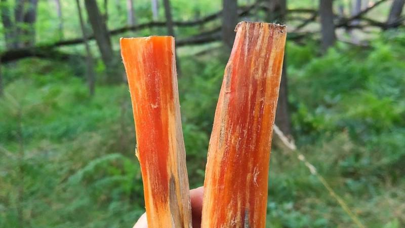 Das Holz zerlegst du in handlichen Stücke. Ein Stück reicht für viel Zunder.