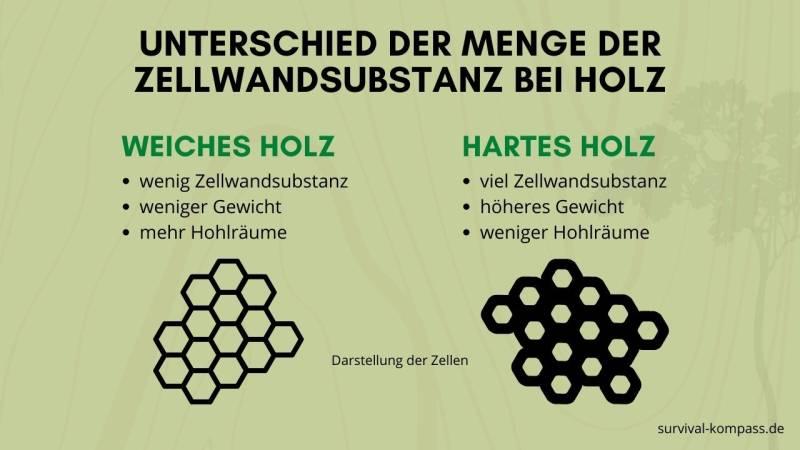 Unterschied der Menge der Zellwandstruktur bei Holz