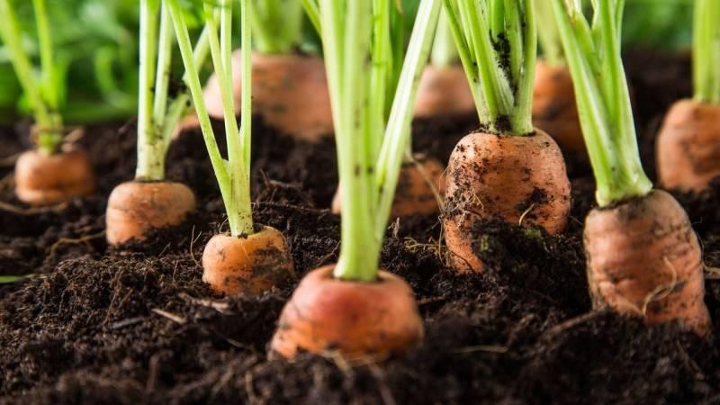 Gemüsegarten: Prepping bedeutet auch Selbstversorgung in Krisenzeiten