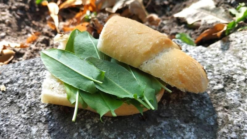 Essbare Pflanzen: diese Notnahrung findest du im Wald