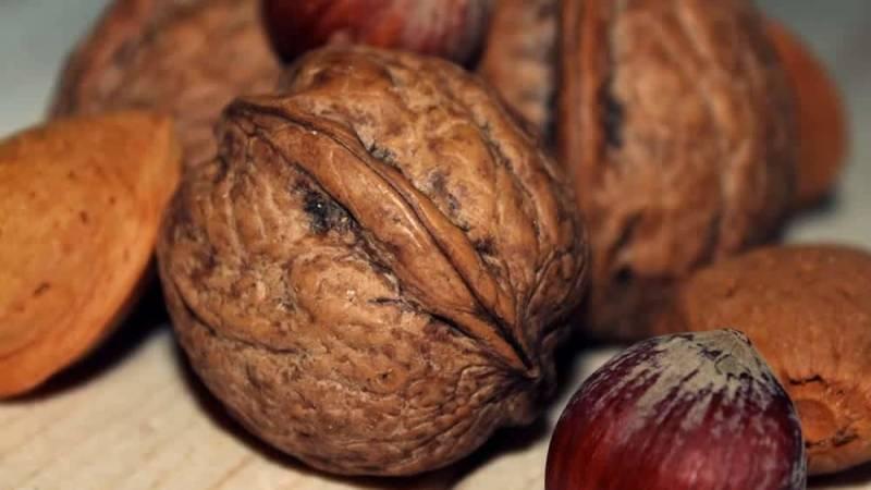 Nüsse liefern Eiweiß und Kohlenhydrate und sind eine perfekte Survival-Nahrung