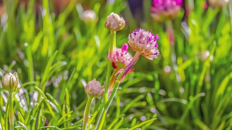 Wie du überprüfst, ob eine Pflanze essbar ist [Genießbarkeitstest]