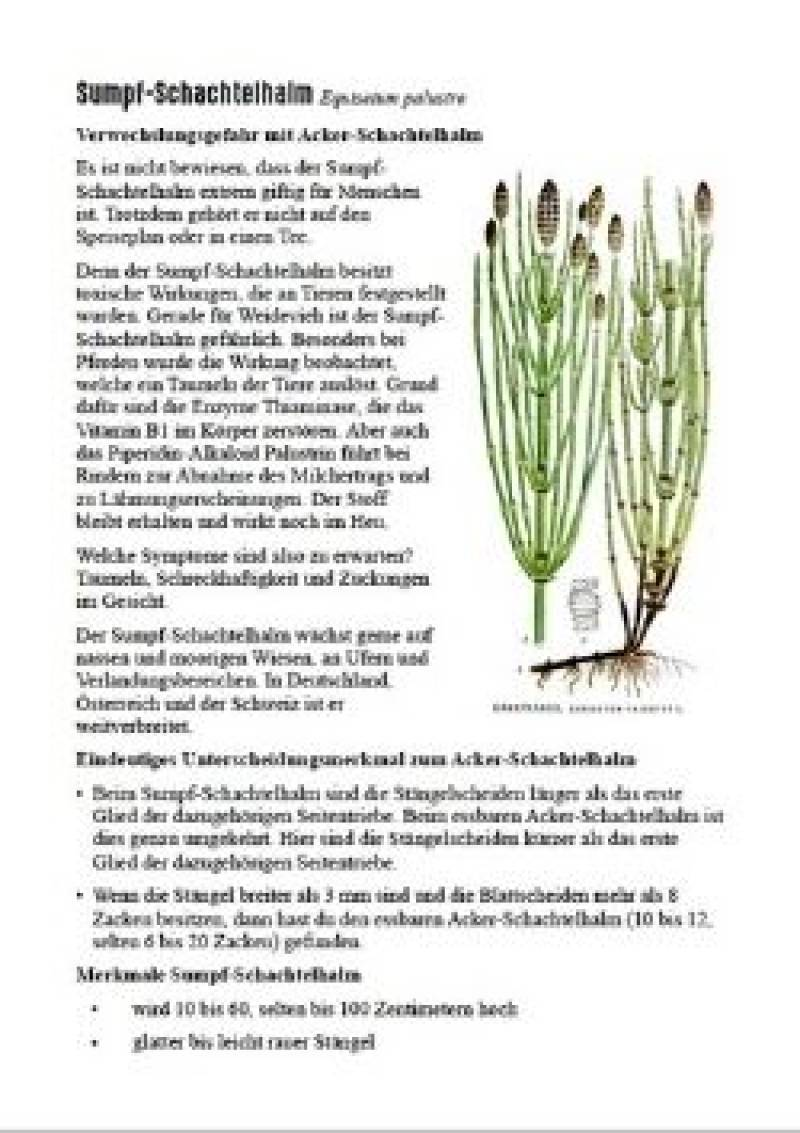 Vorschau Bild 1 zum E-Book Pocket Field Guide: Giftpflanzen