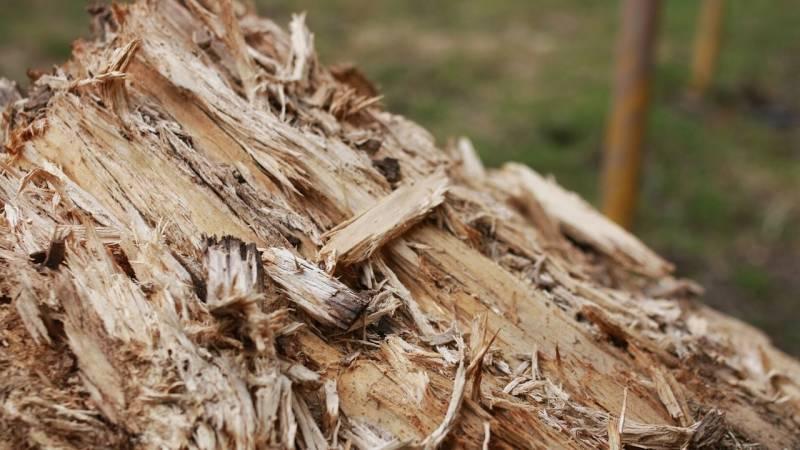 Punk Wood ist brüchig, weich und trocken