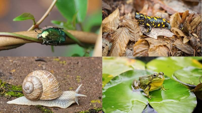 Reptilien, Amphibien, Schnecken und Insekten