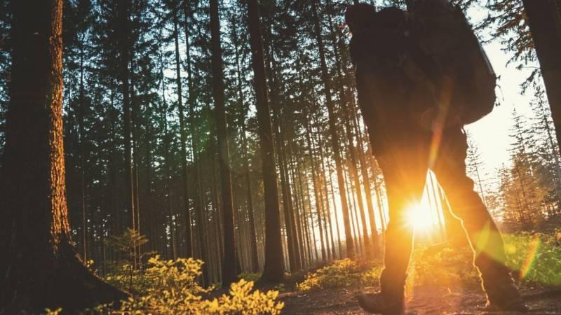 9 Trekking-Camps warten auf dich im Schwarzwald – legales Wildcamping in Baden-Württemberg