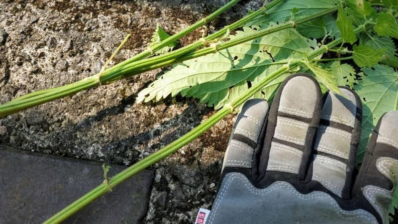 Sammle als Erstes Pflanzen die deine benötigten Fasern haben, wie Brennnesseln