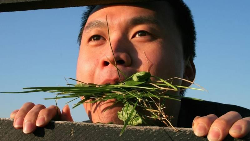 Ich zeige dir, welche Pflanzen du sofort im Wald essen kannst