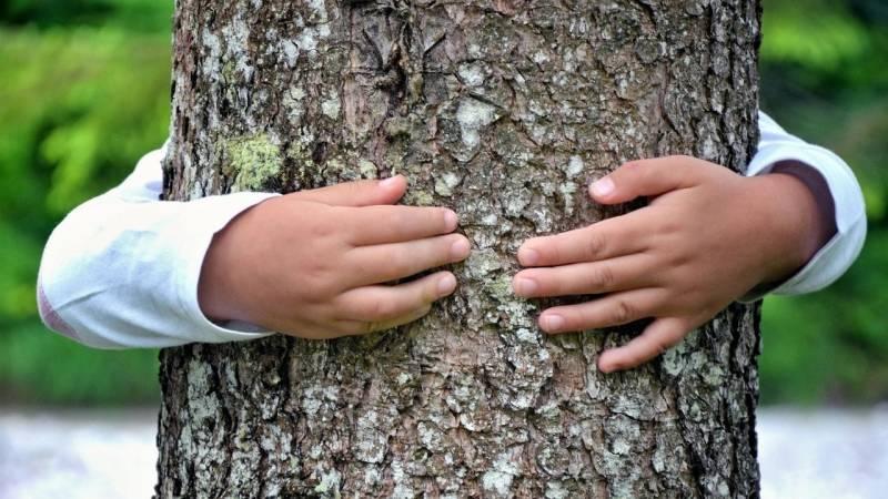 """Beim Spiel """"Baumfinden"""" werden alle Sinne gefordert"""