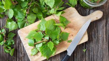 Kann man Baumblätter essen? – 9 Arten, die essbar sind