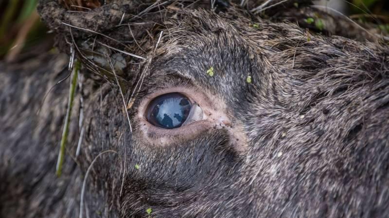 Prüfe die Augen des toten Tieres – sind sie matt, ist es schon länger tot