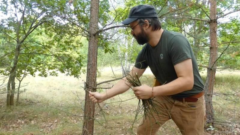 Sammle die trockenen und toten Äste an Nadelbäumen – sie brennen besonders gut