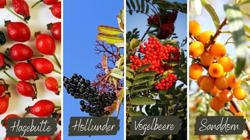 In Deutschland findest du viele verschiedene Früchte