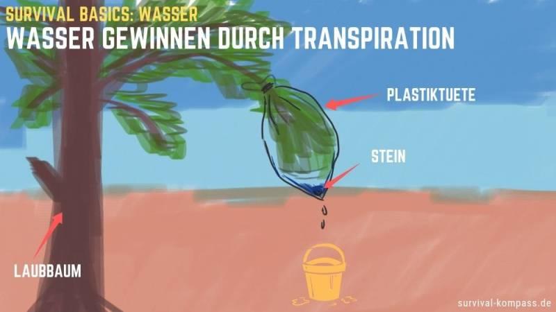 Wasser gewinnen durch Transpiration