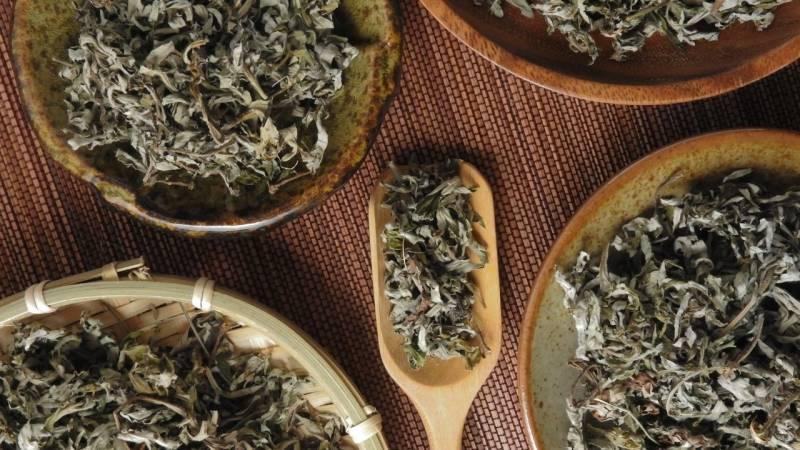 Getrockneter Beifuß fertig für einen Tee