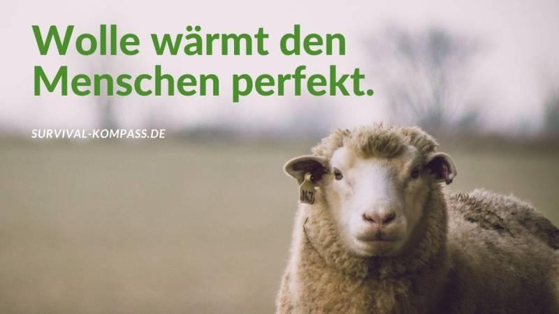 Wolle wärmt den Menschen perfekt.